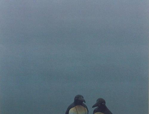 Die Sehnsucht der Pinguine